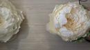 Как сделать розу из бумаги своими руками? РОЗА ПИОНОВИДНАЯ. Обзор мастер-класса от Анны Цветковой.