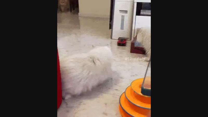 Только самый смелый кот проверит м.