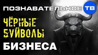 Чёрные буйволы бизнеса Познавательное ТВ Денис Соколов