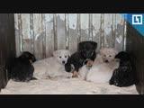 Хотят усыпить больше сотни кошек и собак