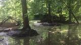 Очистка каскада прудов на реке Чернавка в г. Раменское. Расчистка.