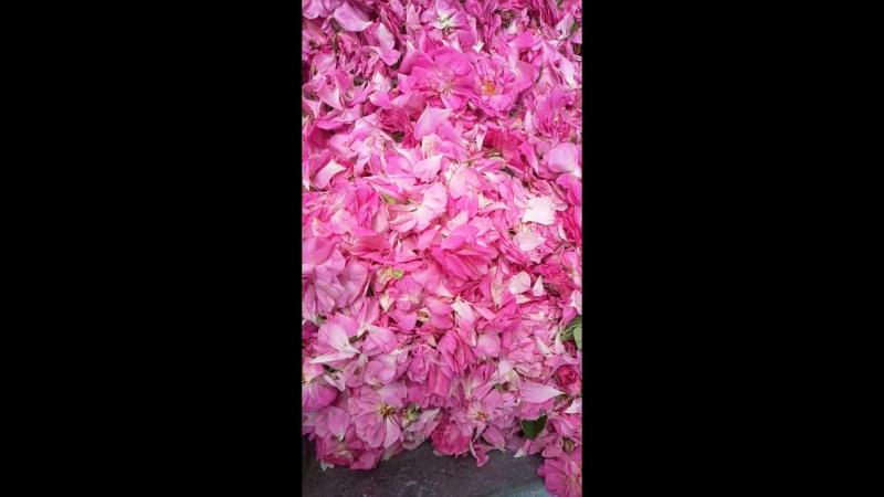 Заготовка Крымской розы (Крымские традиции)