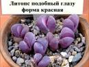 Живые камни 6 часть