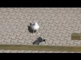 gull vs crow