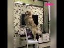 Собака помогает малышу достать шарик