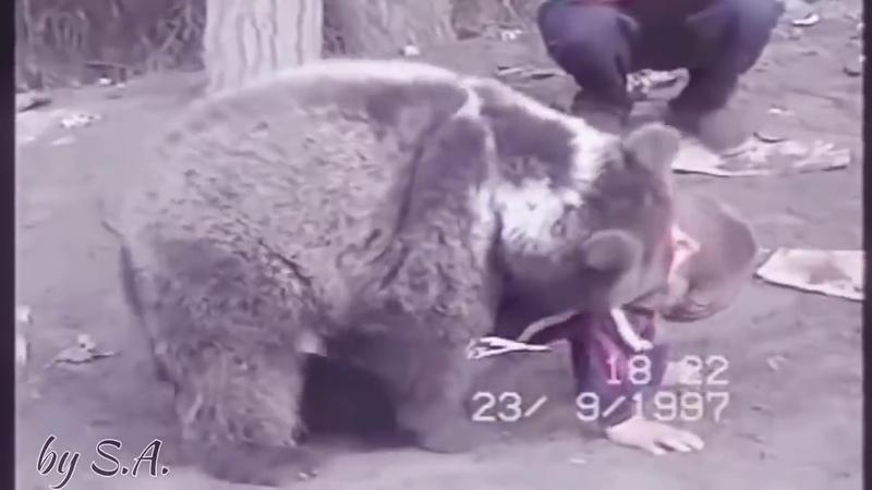 하빕 누르마고메도브 어릴시적 곰이랑 레슬링 하는 영상