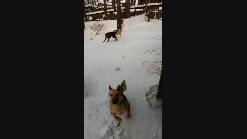 Титан встречает собак. 24.01.19