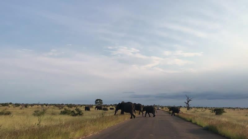 Миграция слонов Нацпарк Крюгер Путешествие по ЮАР