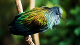 10 Most Beautiful Pigeons In The World