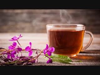 Иван-чай как заваривать и пить правильно. Сколько раз заваривать. Иван-чайная церемония.