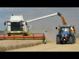 Синий трактор Мультик для детейСобираем урожай с Левой