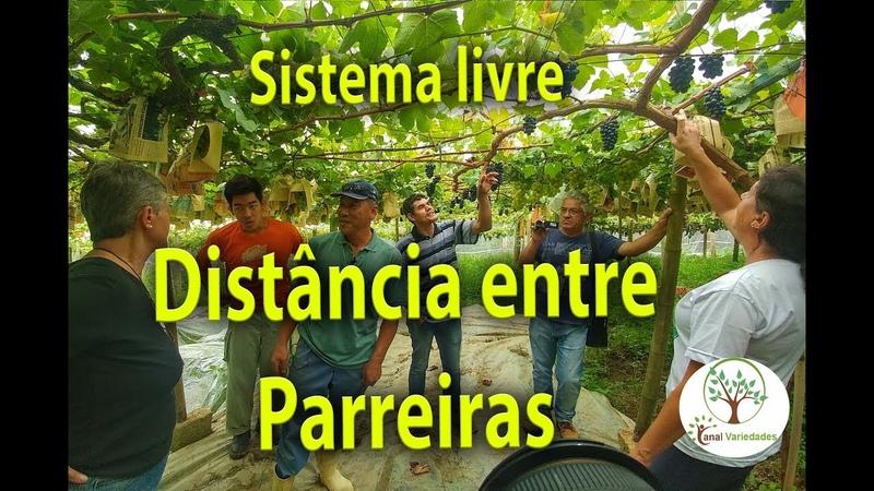 PLANTAR UVA, DISTÂNCIA COM PARREIRAS LIVRES , 04 Plantar em Casa