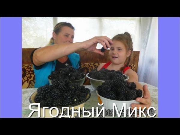 Видеопрезентация сортов ежевики на весну 2019 года Частная коллекция Пономаренко Оксаны Белгород