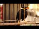 Птичка говорит по китайски