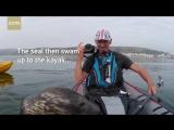 Playful seal tries to climb aboard kayak