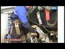Cattle Hoof Trimming - The Hoofman