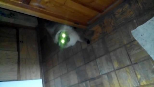 Кот сатана