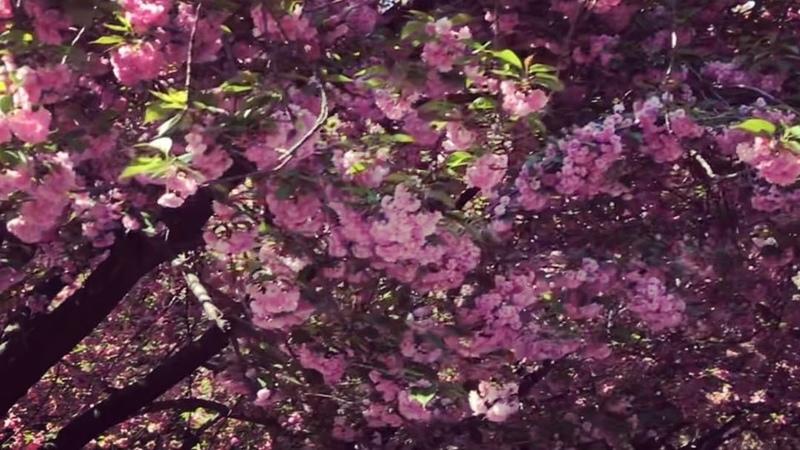 """Serafima Nizovskaya on Instagram: """"Как вам музыка? Имеет право на существование? 🎵 собственноесочинение мгновение настроение движение 👉🏻 sera..."""