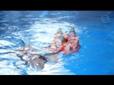Оздоровительный центр DOLPHIN PLANET . Плавание с дельфинами. Август-Сентябрь 2018 года. Город Ярославль.