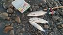 Очередная Клевая рыбалка в Якутии! Yakutia