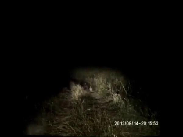 Великий охотник и заяц Приклад спасет ситуацию