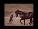 Cheval qui danse