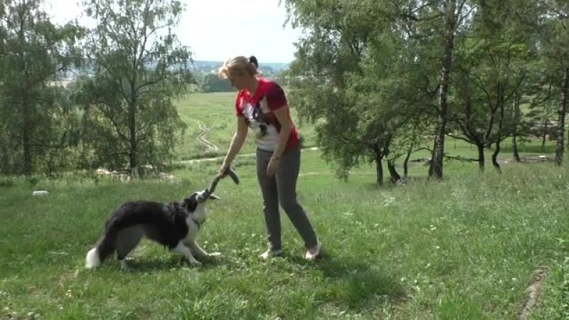 Как научить собаку приносить игрушку. Как научить собаку приносить предметы
