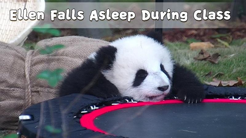 Ellen Falls Asleep During Class | iPanda
