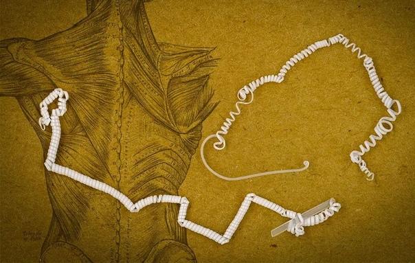 Инженеры создали сверхмощные искусственные мускулы по образу огуречных усиков Ученые из Массачусетского технического института вдохновились конструкцией усиков обычных огурцов, чтобы создать