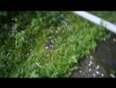 собираем мох