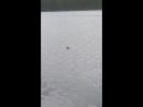 Встреча с балтийским тюленем нерпой