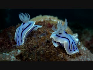 Anilao underwater world