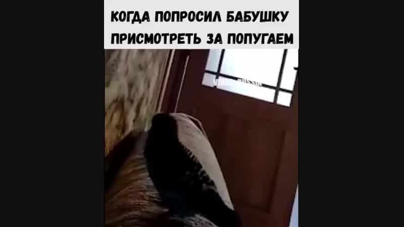 когда попугай погостил у бабули!)