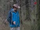 16. Дятлы, разорение муравейников кабанами и дятлами