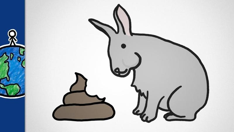 Почему некоторые животные едят какашки