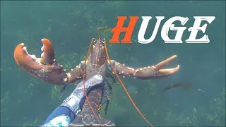Seafoodhunt - Catching a two kilogram Lobster by hand