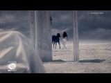 Shadmehr Aghili - Entekhab OFFICIAL VIDEO HD.mp4