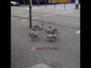 Дисциплинированные утки