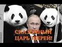 Путин и панды Адекват 2019