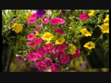 Самые красивые растения, которые стоит посадить в саду и на даче-Дачники
