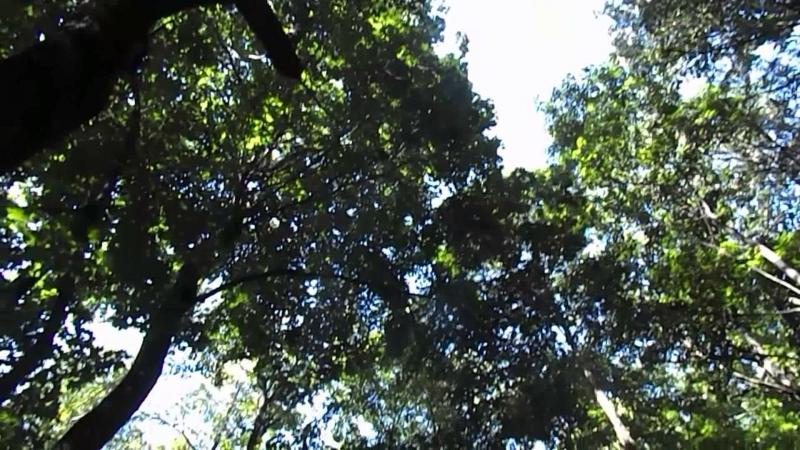 Копчик в лесу 28.08.18