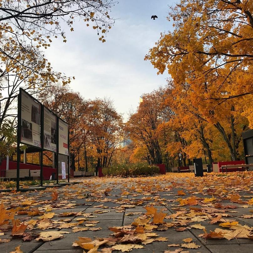 Илья Колесников | Москва