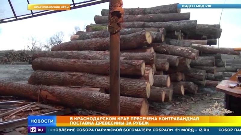 В Краснодарском крае пресечена контрабандная поставка древесины за рубеж
