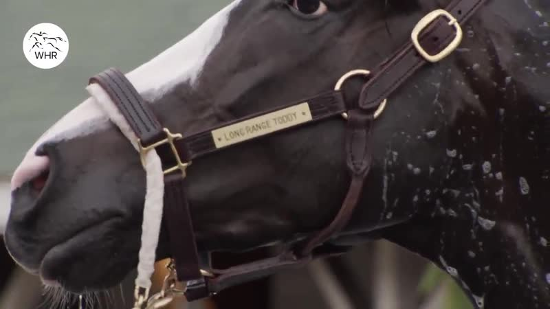 Highlights from trackwork at @ChurchillDowns ahead of the @KentuckyDerby - - Who do you think wins the first race of the Triple