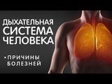 Болезни органов Дыхательнои