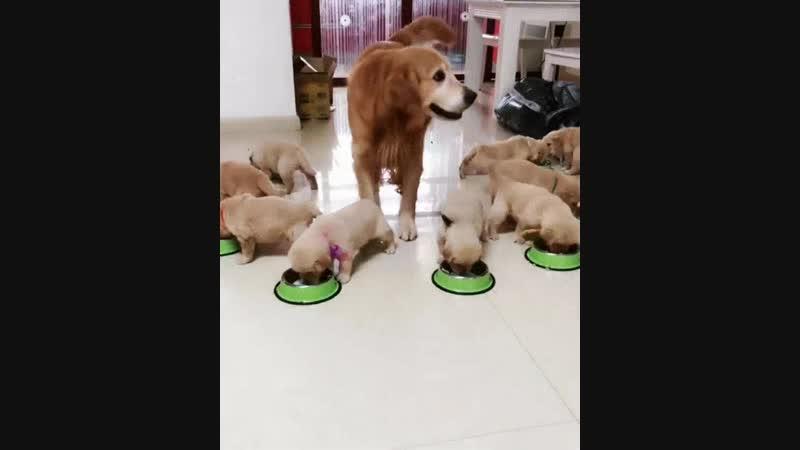 Дети сыты мама довольна.