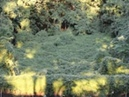 HEMLOCK FOREST by Moyra Davey - edited by Alexander Kaluzhsky
