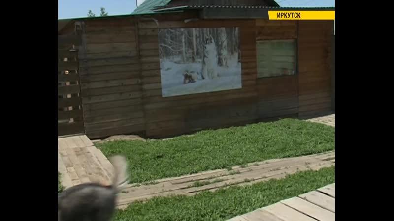 Роман Константинов занял первое место на Кубке России по ездовому спорту