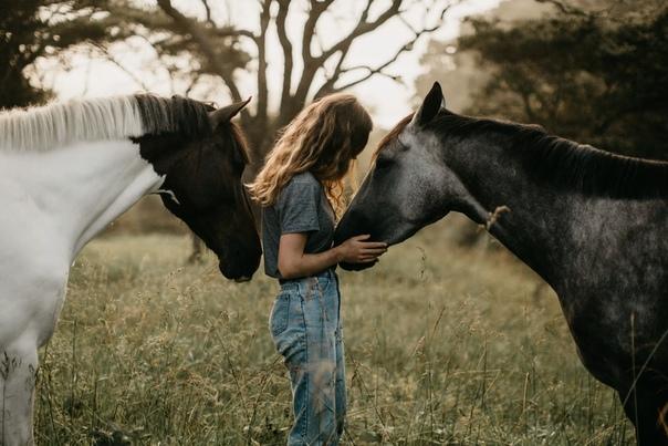 Лошади  преданные животные
