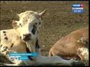 Бесплатное молоко по стакану в день планируют выдавать школьникам Иркутской области